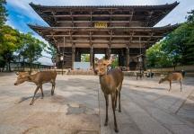 Nara Deer Temple